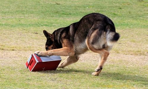 Hondenbrigade